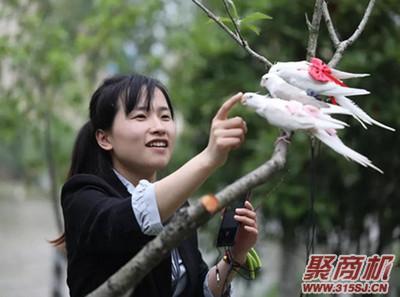 """""""神一样的发明""""!95后姑娘做鸟用尿不湿 远销国外市场月入三万_1"""